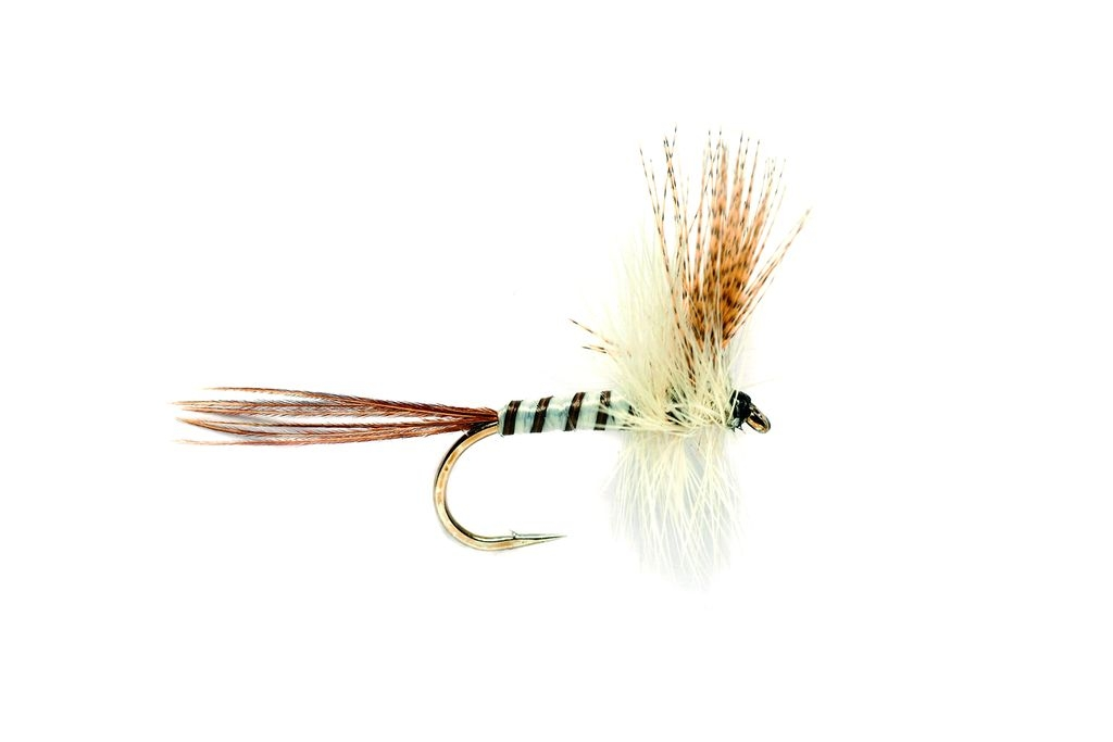 Mayfly Brown