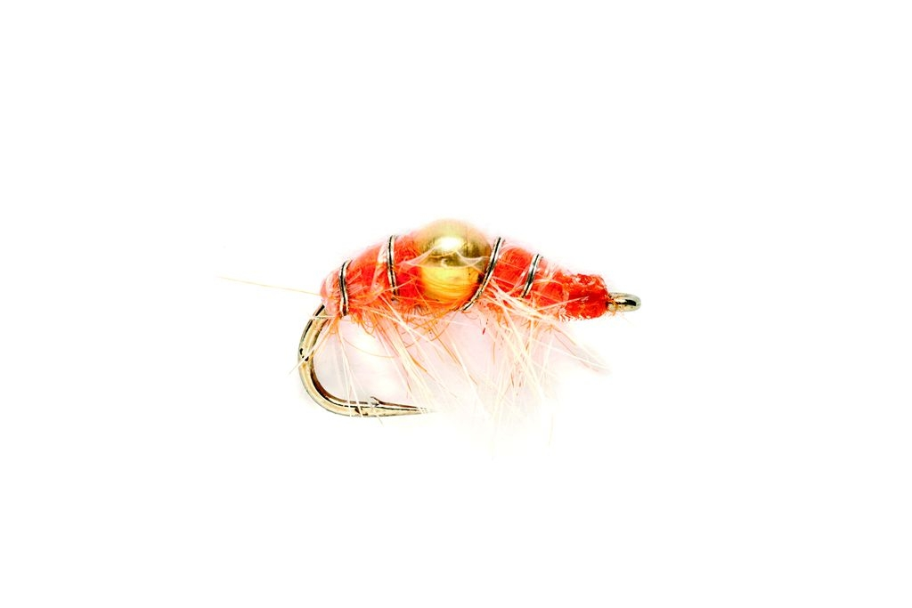 Shrimp Orange (Gold Nugget)