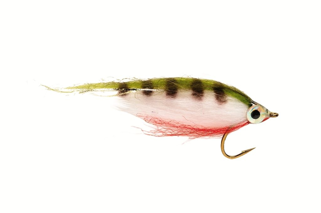 Polar Minnow Perch