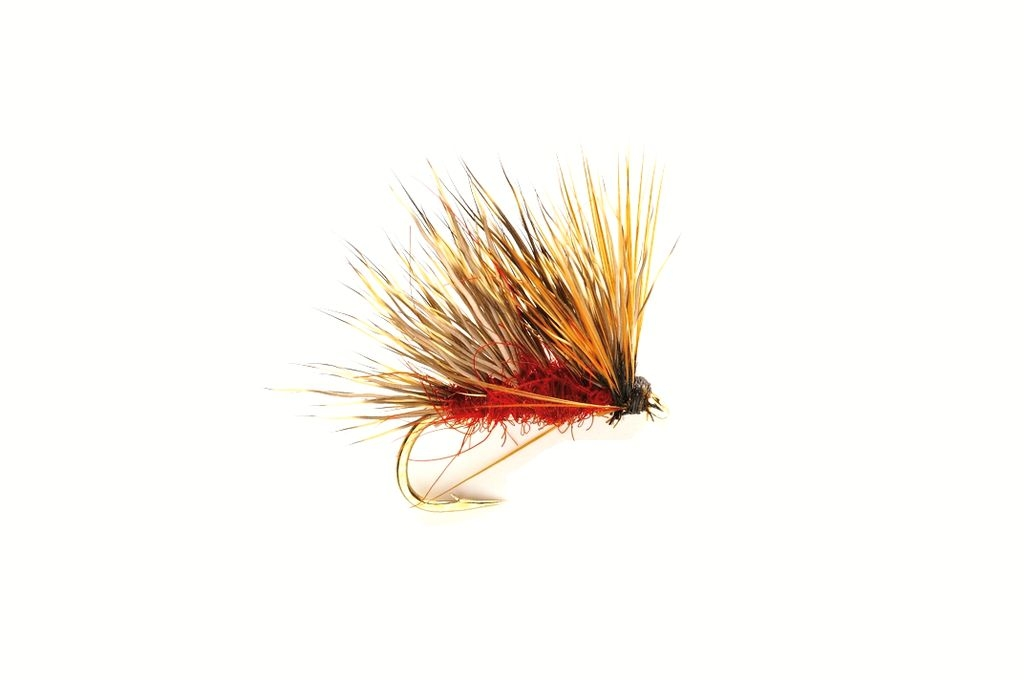Sedgehog Fiery Brown