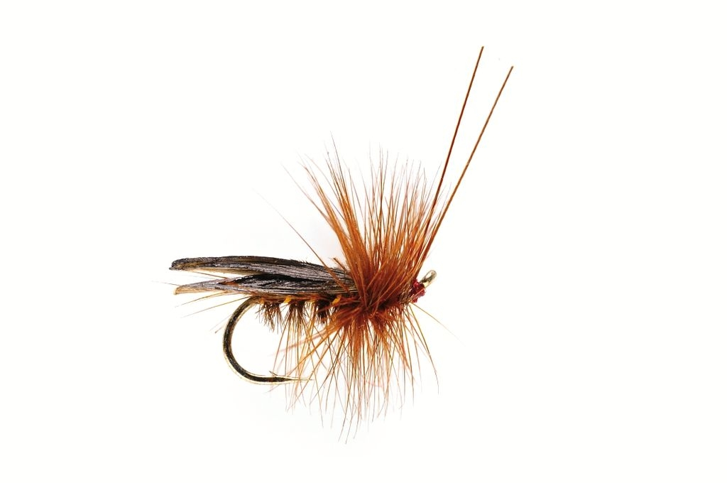 Sedge Saville Super Dark Brown