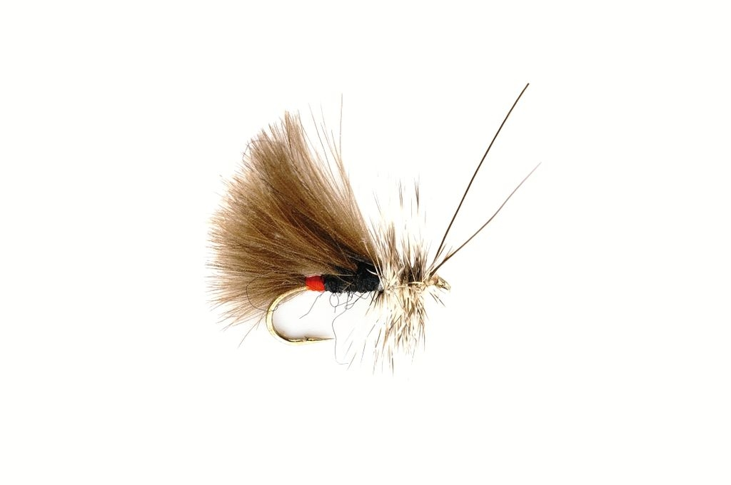 Sedge High Rider CdC Black