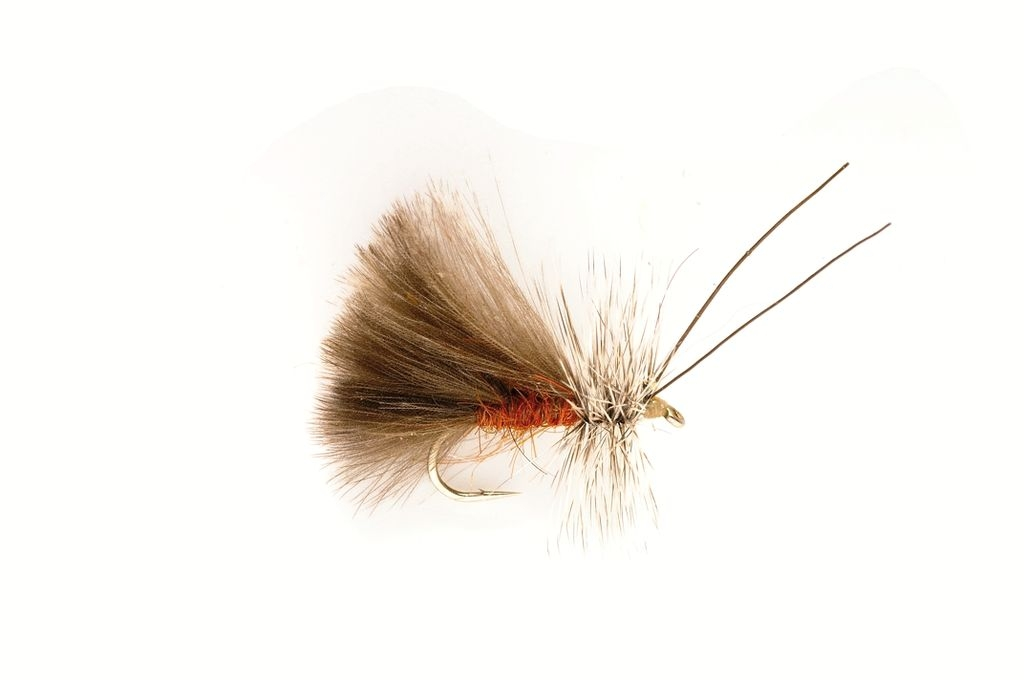 Sedge High Rider CdC Brown