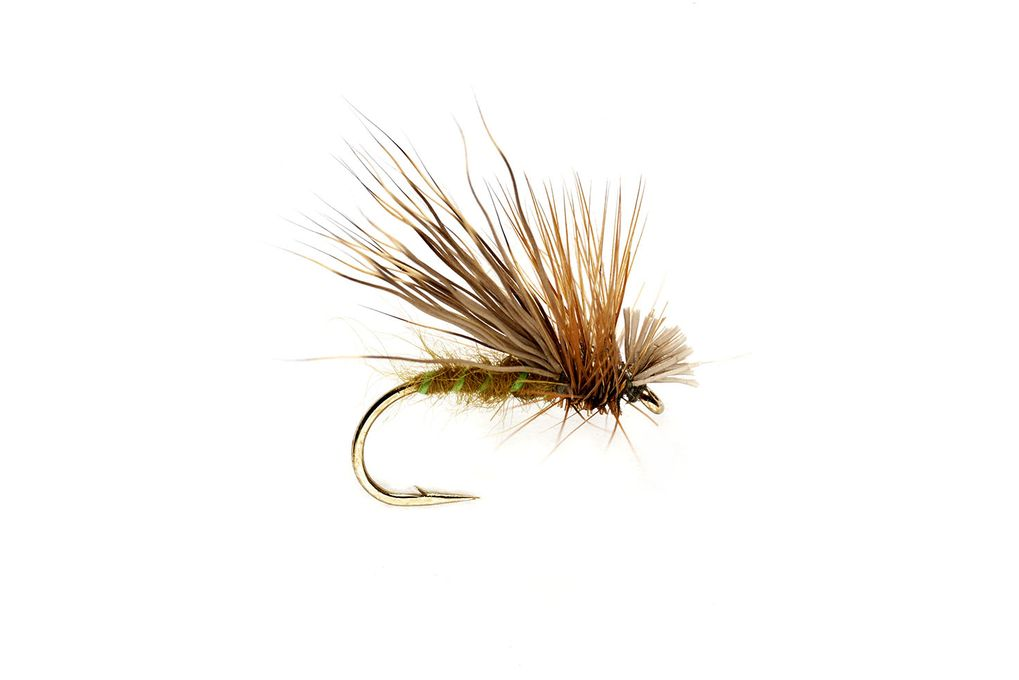 Olive Drop Sedge