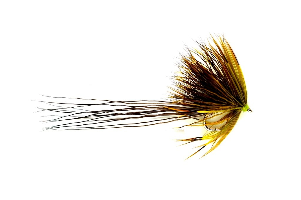 Sedgehog Mayfly